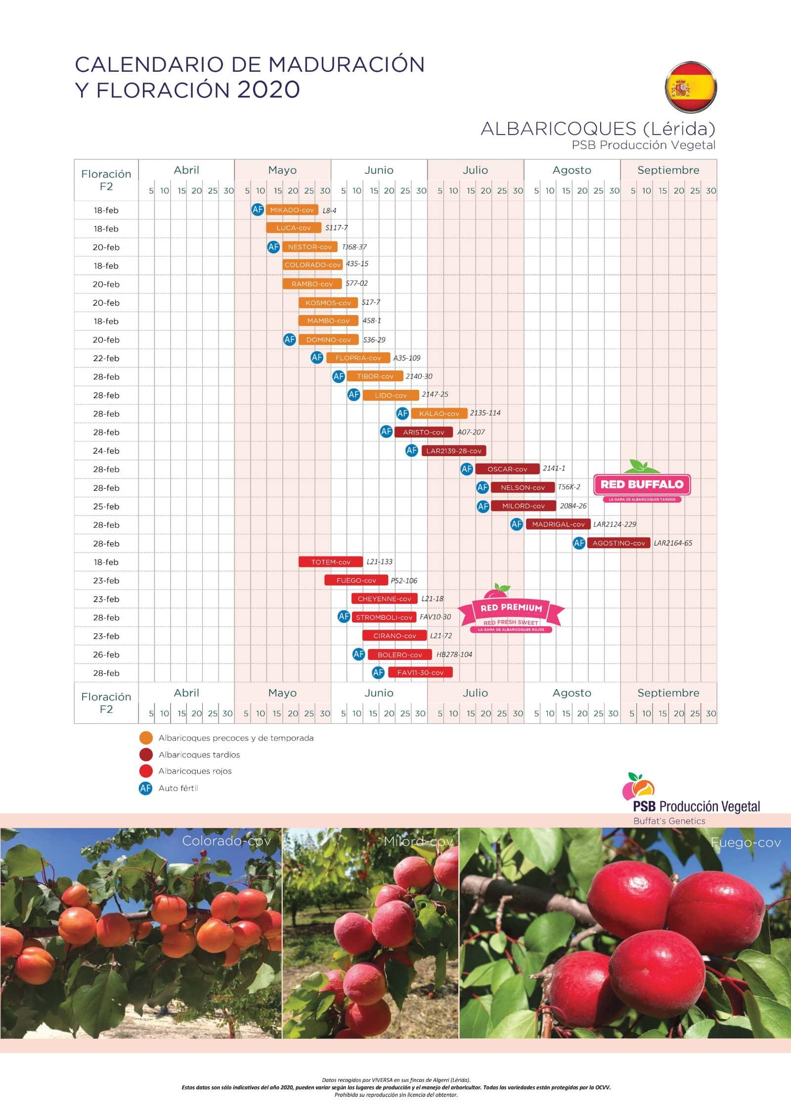 Calendario albaricoques
