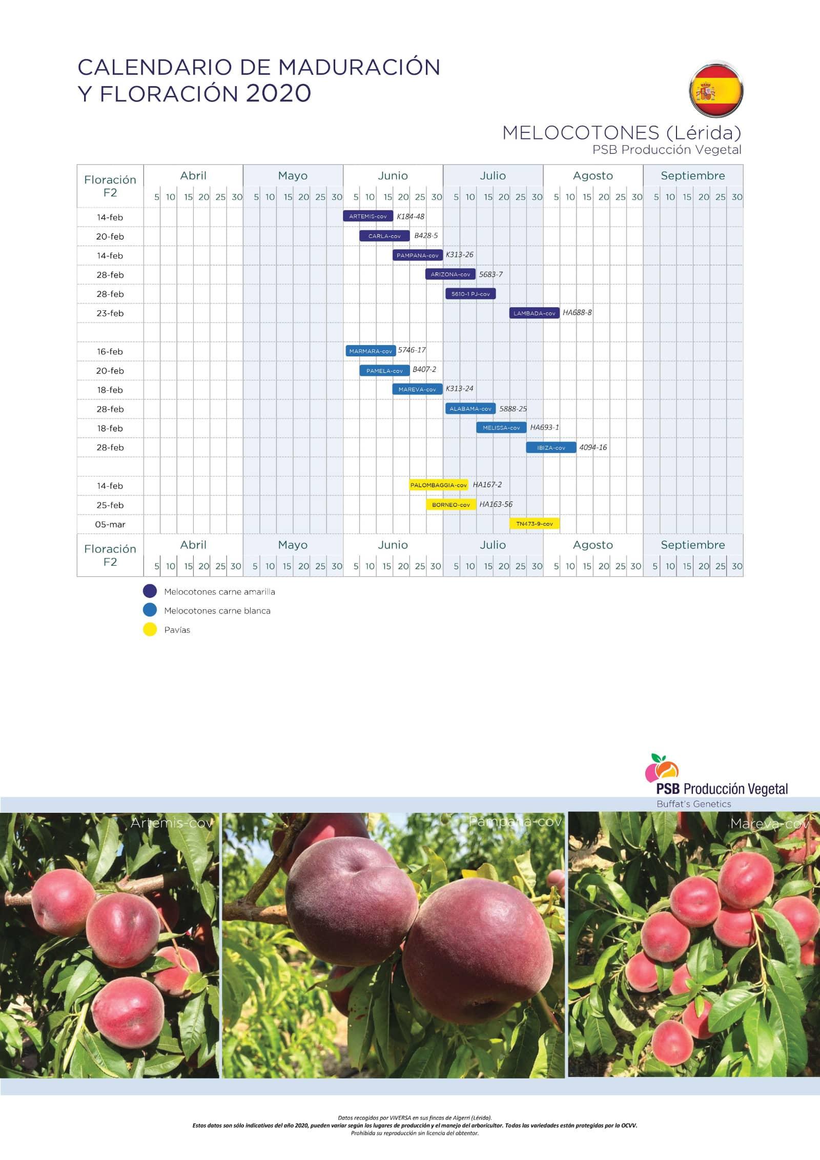 Calendario melocotones