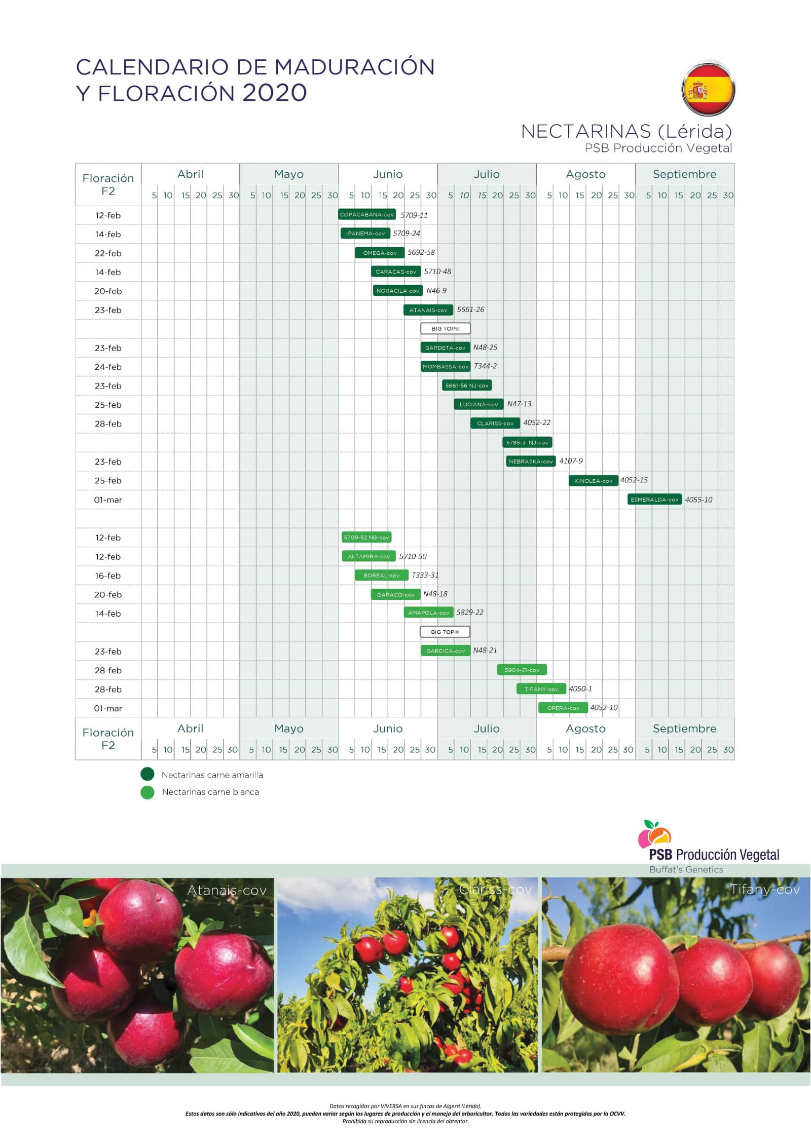 Calendario Nectarinas